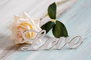 Hintergrundbilder Rose Liebe Wort Englisch Blüte
