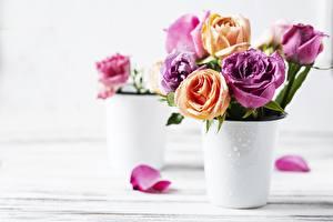 Pictures Roses Petals Vase Blurred background Flowers