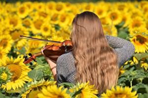 Pictures Helianthus Violin Fields Hair Back view Brown haired young woman