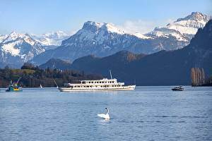 Pictures Switzerland Mountains Lake Birds Swans Riverboat Alps lake Lucerne Nature
