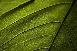 Bakgrundsbilder på skrivbordet Textur Närbild Löv Grön Natur