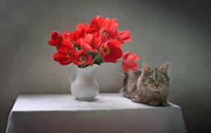 Обои для рабочего стола Тюльпаны Букеты Кошки Ваза Стол Взгляд Цветы Животные картинки