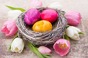Wallpapers Tulips Easter Nest Eggs Flowers