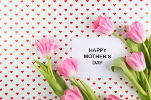 Fotos Tulpen Muttertag Rosa Farbe Blüte