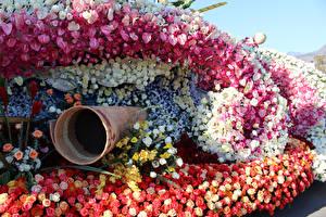 Hintergrundbilder Vereinigte Staaten Parks Rose Calla palustris Orchideen Schwertlilien Kalifornien Design Pasadena Blumen