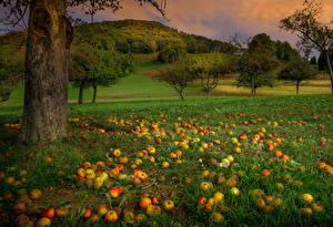 Fotos Äpfel Bäume Gras Natur