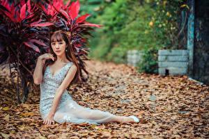 Hintergrundbilder Asiatisches Kleid Blattwerk Sitzt Blick Mädchens
