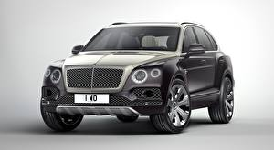 Wallpapers Bentley Grey Gray background CUV Luxury Metallic  automobile