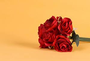 Hintergrundbilder Sträuße Rose Farbigen hintergrund Rot Blüte