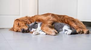 Fotos Katzen Hund Zwei Schlafendes Liegt ein Tier
