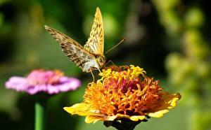 Fotos Nahaufnahme Schmetterling Bokeh Tiere