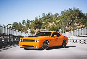 Pictures Dodge Orange srt, challenger, 392, hemi Cars