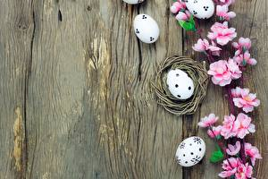 Fotos Ostern Ei Vorlage Grußkarte Blüte