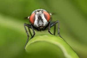 Papel de Parede Desktop moscas De perto Bokeh animalia