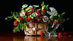 Fotos Hügel-Erdbeere Gänseblümchen Blatt Weidenkorb das Essen Blumen