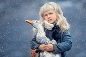 Pictures Geese Birds Blonde girl Staring Animals