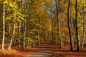 Bilder Deutschland Herbst Wege Bäume Blatt Eastern Eifel Natur