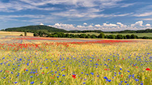 デスクトップの壁紙、、ドイツ、夏、畑、ケシ属、矢車菊、Eastern Eifel、自然、花