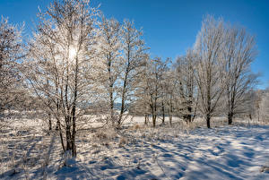 Wallpaper Germany Winter Morning Snow Trees Frost Mehren