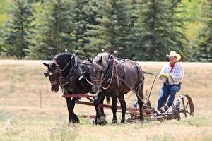 Bilder Pferd Mann Gras Arbeitet Der Hut Brille Sitzend ein Tier