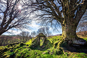 Pictures Ireland Stones Trees Moss Grass Sun Branches Letterbarrow, Donegal