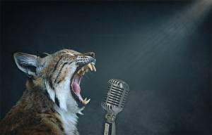 Bilder Luchse Eckzahn Grinsen Mikrofon ein Tier
