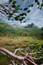 Wallpaper Norway Mountains Forests Branches Grass Northern Norway Nature