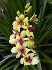 Fotos Orchideen Blüte