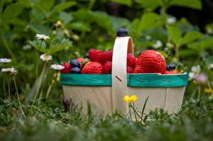 Image Raspberry Strawberry Blueberries Wicker basket Grass Bokeh