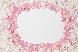 Pictures Rose Petals Template greeting card flower