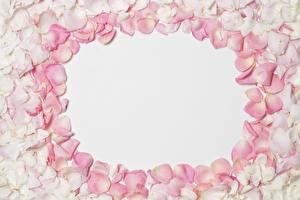 Hintergrundbilder Rose Blütenblätter Vorlage Grußkarte Blüte