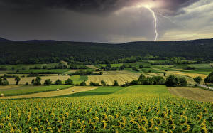 Pictures Scenery Fields Sunflowers Lightning