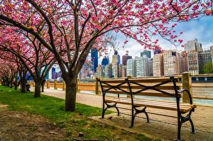 Pictures USA Flowering trees Building New York City Waterfront Bench HDRI
