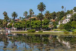 Fotos Vereinigte Staaten Gebäude See Küste Kalifornien Los Angeles Palmen Echo Park Lake Städte