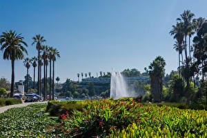 Image USA Park Fountains Los Angeles Palms Echo Park Lake Nature