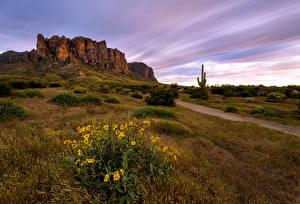 Photo USA Spring Cliff Grass Arizona