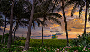 Images USA Sunrises and sunsets Florida Palms Grass Atlantic Heights Miami Beach