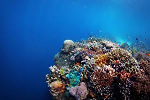 Fonds d'écran Monde sous-marin Corail Poisson