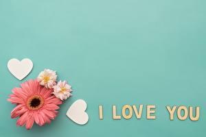 Fotos Valentinstag Gerbera Vorlage Grußkarte Englischer Text Herz Blüte