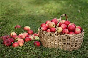 Wallpapers Apples Wicker basket Food