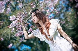Images Asiatic Branches Brown haired Hands Dress Blurred background Sakura Girls
