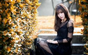 Bilder Asiatisches Strauch Braune Haare Kleid Blick Sitzt junge frau