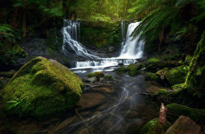 Picture Australia Park Waterfalls Stones Moss Mount Field National Park Nature