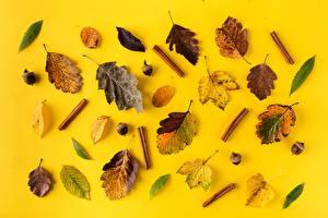 Fotos Herbst Zimt Blattwerk Eicheln Natur