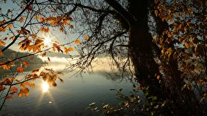 Picture Autumn Lake Trees Branches Foliage Nature