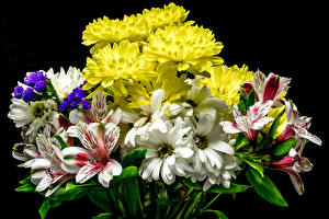 Bilder Sträuße Chrysanthemen Alstroemeria Schwarzer Hintergrund Blumen