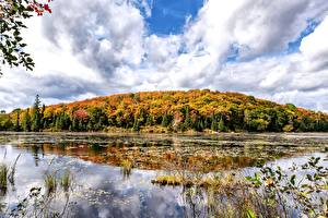 Image Canada Autumn Forests Lake Ontario Nature