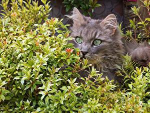 Bilder Katze Ast Schnauze Starren ein Tier
