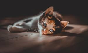 Wallpaper Cat Glance Kittens