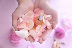 Bilder Großansicht Hand Kronblätter Parfüm